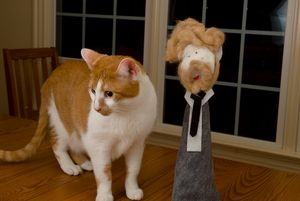 Cat fur Conan O'Brien and Mr. Scrubby