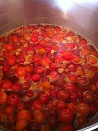 Cooking down Sand Hill plums for jelly and jam