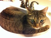 This is an old photo of Dr. Jones in the sink, not one of him actively peeing, in case you were wondering.