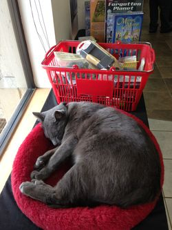 Polydactyl shop cat at TableTop Game & Hobby