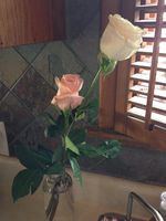 A full week later, these roses are still going strong. Perhaps the smoke preserved them.