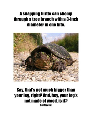 Snapping_turtle_copy